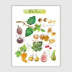 Fall fruits, Fruit print, 8X10 print, Watercolor fruit art, Kitchen art print, Home decor, Fruit painting, Food artwork, Autumn print by lucileskitchen on Etsy