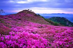 115DA04E4F629D62139A2C (800×533) South Korea, Mountains, Nature, Travel, Color, Naturaleza, Viajes, Colour, Korea