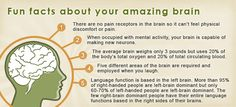 Brain Fun facts and things you can do to sharpen your memory including B,D and E supplements.