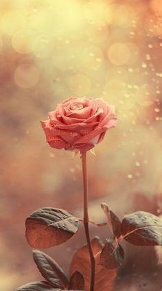 rose..