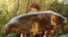 A Quick Common From The Mere