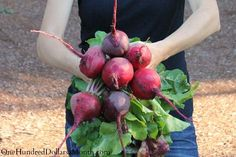 How to Grow Beets {Start to Finish} #vegetableseedsraisedbeds