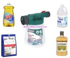 Healthy Hostas Care - Mamas Blog Central  home remedy for bugs  .