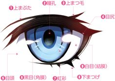 Site Wie zeichnet man Illustration / Manga Navi URL www. Name - Anime Realistic Eye Drawing, Body Drawing, Manga Eyes, Anime Eyes, Digital Painting Tutorials, Digital Art Tutorial, Drawing Tips, Concept Art Tutorial, Drawing Tutorials