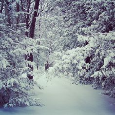 Snow in North Georgia.