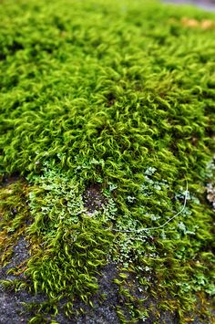 Close up of moss on a side of a rock.