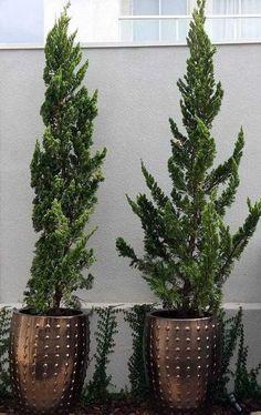 Comment Planter, Planting Succulents, Bonsai, Garden, Plants, Design, Home Decor, Deck, Google