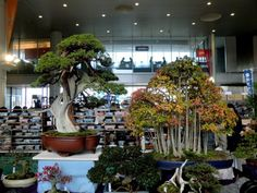 Bonsai Symbol Tower 5