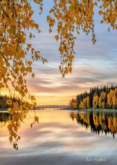 Great Photos, Cool Pictures, Heaven On Earth, Mother Earth, Beautiful Landscapes, Art Projects, Lens, Creatures, Autumn