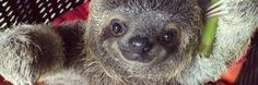 Sloth!  :)