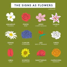What's Your Flower Symbol, And Do You Agree? Aquarius Constellation Tattoo, Virgo Tattoo Designs, Virgo Symbol, Zodiac Elements, Flower Symbol, Zodiac Signs Astrology, Aries Zodiac, Taurus, Zodiac Cancer