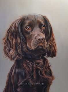 Commission of a beautiful Cocker Spaniel by Sarah Eden Portraits. Wildlife Paintings, Animal Paintings, Animal Drawings, Pet Drawings, Realistic Drawings, Working Cocker, Dog Portraits, Portrait Art, African Animals