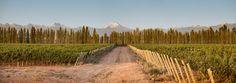 Bodega Doña #Paula (Ugarteche, #Mendoza)