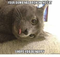 Image result for broken cats