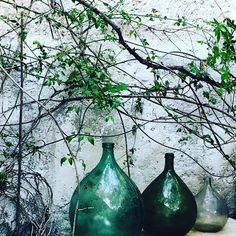 #roses#jasmin# vines#three-greenbottles#whereflowersdream #wherethewildthingsare #France #kitchengarden#muse#quiet#beforethestirm#greens