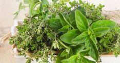 6 βότανα για άμεση απώλεια βάρους και καύση λίπους Health And Nutrition, Health Fitness, Healthy Exercise, Flu Season, Program Design, Natural Medicine, Fresh Herbs, Immune System, Medicine Cabinet