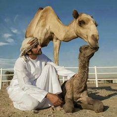 2249 beste afbeeldingen van Ver. Arabische Emiraten ...