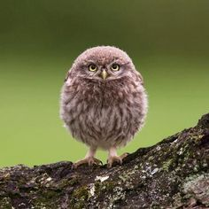 A baby owl like an egg :)