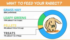 Rabbits go through many life stages as they grow older. When you get a little baby bunny, be prepared to care for your rabbit through all life stages. Rabbit Diet, Rabbit Eating, Rabbit Food List, Rabbit Playpen, Pet Rabbit, Rabbit Toys, Pet Bunny Rabbits, Bunnies, Rabbit Pellets