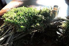 moss advent wreath