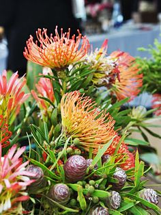 Flowers from Cape Town South Africa Proteas Australian Plants, Cape Town South Africa, Out Of Africa, Tropical Flowers, Flower Art, Flower Power, Planting Flowers, Wedding Bouquets, Beautiful Flowers
