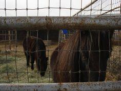 The horsies