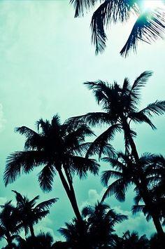 #sky #palmtrees