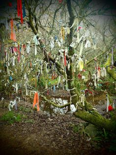 A couple of miles north of Penzance, and at the end of a winding muddy path, Madron Holy Well is thought to date from pre-Christian times and is still visited by passers-by. The well is easy to find, with signposts and more traditional 'clouties' - pieces of rag tied to the tree according to traditional custom at healing wells.