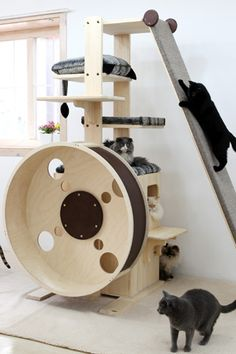 Cats Toys Ideas - looloo The slant wall - I think Ill build one. once we leaned a queen size mattress against a wall and our cat just walked up the side - it was so weird and funny looking! - Ideal toys for small cats Diy Cat Tree, Cat Playground, Playground Design, Indoor Playground, Cat Shelves, Cat Enclosure, Unique Cats, Cat Condo, Cat Tree Condo