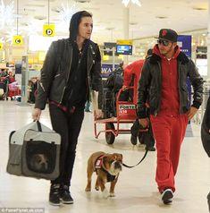 Four legged friend: Lewis Hamilton strolls across Heathrow Airport with Roscoe. New pup Coco can be seen in the dog carrier Lewis Hamilton Formula 1, Malinois Dog, British Bulldog, Triumph, Heathrow Airport, F1 Drivers, Dog Carrier, English Bulldogs, George Michael