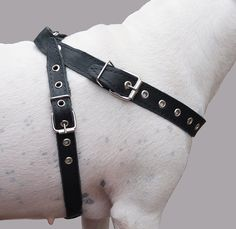 Black Real Leather Dog Harness Medium 2125 Chest 1 Wide Straps -- To view further for this item, visit the image link. (This is an affiliate link) Pet Dogs, Dog Cat, Pin Image, Image Dog, Image Link, Dog Harness, Cartier Love Bracelet, Real Leather, 21st