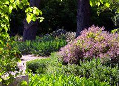 Drought tolerant garden design by Eckersely Garden Architecture