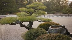 garden pattern - Pesquisa Google