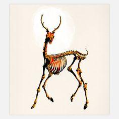 Deer, by Alvaro Tapia Hidalgo