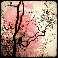 Sur La Branche  by Marc Loret
