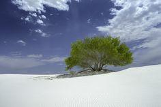 Emerald Misfit - Benjamin Edelstein Landscape Photography