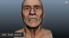 FACS based Facial Rigging