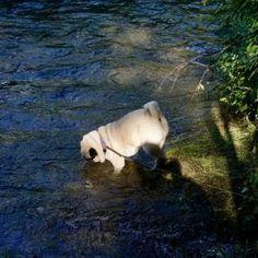 Urlaub mit Hund im Pielachtal im Hotel Steinschalerhof, NÖ   Hundereise Regional, Polar Bear, Animals, Hiking, Stones, Pet Dogs, Viajes, Animales, Animaux
