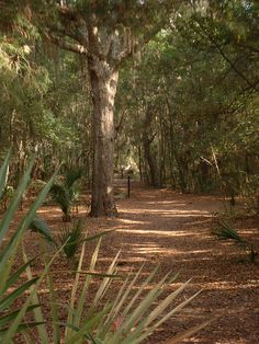 Hilton Head, we rode bikes through trails and it is just like this picture!