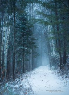 🇨🇦 Snowy path in the woods (Petawawa, Ontario) by Dustin Abbott ❄️cr. Woods Photography, Landscape Photography, Wonderful Places, Beautiful Places, Amazing Places, Snowy Woods, Wooded Landscaping, Winter Scenery, Winter Wonder