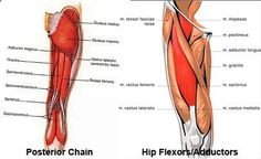Bow Legs Correction-Exercise - knock knees exercises - Looking for a Permanent Remedy for Bow Legs - Without the Need for Surgery? Read on to discover exactly what you need to do to fix your bow legs once and for all, and enjoy perfectly straight and attractive legs for the rest of your life!