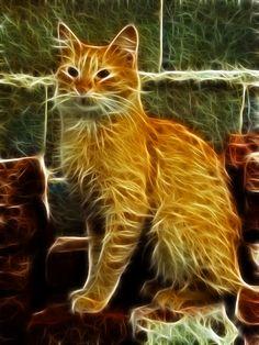 gato luminoso 1