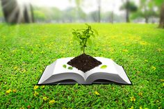 Why Growing a Healthy Green School is Golden