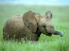 I will be best friends with a baby elephant.