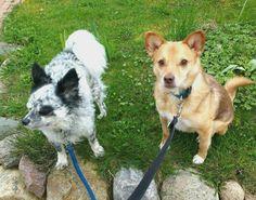 Das sind Rica und Bobby. Ich liebe die beiden über alles und sie waren es, die mich dazu gebracht haben, einen eigenen Hundeblog zu starten. Mehr über die beiden erfährst du auf Ricas Dogblog.