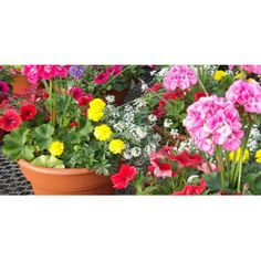 Huge Outdoor pots of mixed annuals are perfect Mother's Day gifts, Heritage House has Hanging baskets of mixed annuals too.