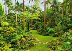 Top 10 things to do in Barbados - Huntes Gardens look beautiful