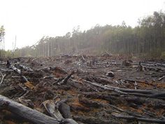Vegetarianism saves the trees; meat eating leads to deforestation