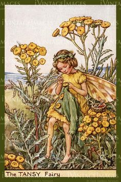 The Tansy Fairy. Vintage flower fairy art by Cicely Mary Barker. Taken from 'Flower Fairies of the Wayside'. Click through to the link to see the accompanying poem. Cicely Mary Barker, Flower Fairies Books, Vintage Fairies, Beautiful Fairies, Fantasy Illustration, Fairy Art, Faeries, Illustrators, Dragons