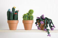 Cactus con Natura